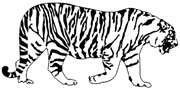 Bengal tiger clipart image